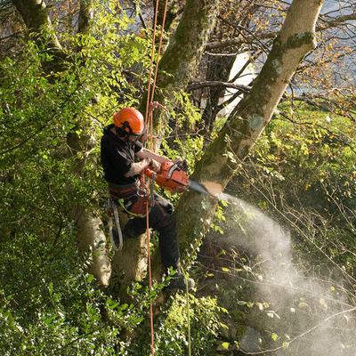 Tree Removal with Spokane Tree Service